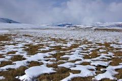 łąki zima Fotografia Royalty Free