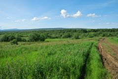 łąkowa droga Fotografia Stock
