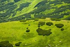 łąkowa góra Obraz Stock
