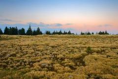 łąkowa góra Fotografia Stock