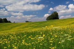 łąkowa góra Zdjęcie Royalty Free