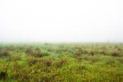 Łąkowa i gęsta mgła obraz royalty free