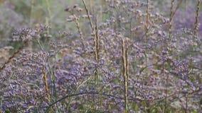 Łąkowa kwiat huśtawka od wiatru zdjęcie wideo