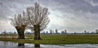 łąkowa rzeka Zdjęcia Stock