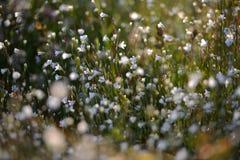 Łąkowa trawa i kwiaty Obrazy Royalty Free