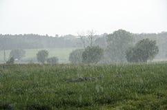 Łąkowa ulewa obrazy stock