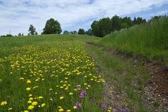 łąkowa wiosna Obraz Royalty Free