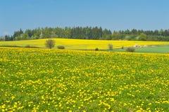 łąkowa wiosna zdjęcia royalty free