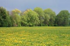 łąkowa wiosna Fotografia Stock