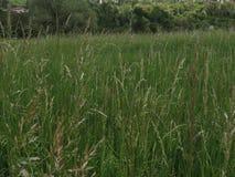 Łąkowa zielona trawa w wiośnie z calmness i powiązaniu z naturą zdjęcie royalty free