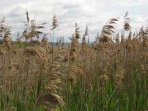 Łąkowa zielona trawa w wiośnie z calmness i powiązaniu z naturą obrazy royalty free