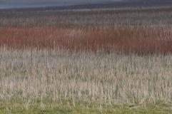 Łąkowe trawy beżowe Burgundy Obraz Stock