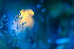 Łąkowe trawy w lato nocy zdjęcie royalty free