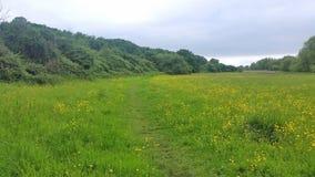 Łąkowej trawy ziemia w London blisko Heathrow lotniska UK fotografia stock