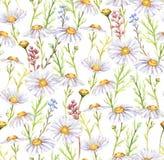 Łąkowi chamomiles kwiaty Obrazy Stock