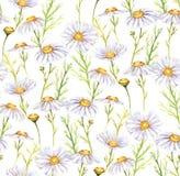 Łąkowi chamomiles kwiaty Zdjęcia Royalty Free