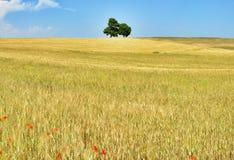 łąkowi drzewa dwa Zdjęcia Stock