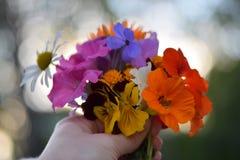 Łąkowi kwiaty Obraz Stock