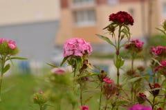 Łąkowi kwiaty Obrazy Royalty Free