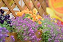 Łąkowi kwiaty Fotografia Stock