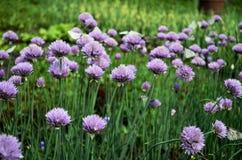 Łąkowi kwiaty Zdjęcie Royalty Free