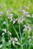 Łąkowi kwiaty Rosyjska natura Obraz Stock