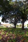 łąkowi oaks Obraz Royalty Free