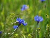 Łąkowi wildflowers fotografia stock