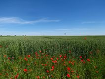 Łąkowi wildflowers obraz royalty free