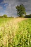 łąkowy drzewo Zdjęcie Royalty Free