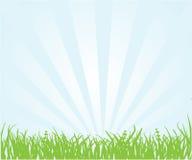 łąkowy lato ilustracja wektor