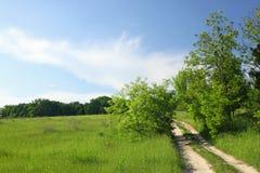 łąkowy lato Zdjęcie Stock