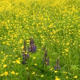 łąkowy lato Fotografia Stock
