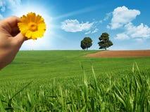 łąkowy słońce zdjęcia royalty free