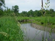 Łąkowy strumień Zdjęcie Royalty Free