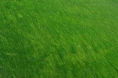 Łąkowy tło Zdjęcie Stock