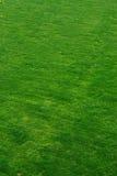 Łąkowy tło Fotografia Stock