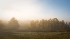 łąkowy trybowy ranek Zdjęcia Royalty Free