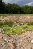 łąkowy zanieczyszczenie Zdjęcie Stock