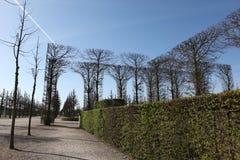 Łękowaci tnący drzewa Obraz Royalty Free
