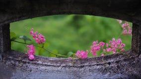 Łańcuch miłość kwitnie w ranku obraz royalty free
