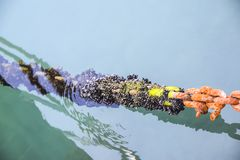 Łańcuch od morza oceanu mech i pomarańcze ośniedziała zieleń z fotografia royalty free