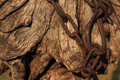 Łańcuch wokoło beli Zdjęcie Stock