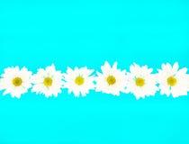 łańcuszkowa zwariowana daisy Zdjęcia Stock