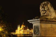 Łańcuszkowego mosta lew z parlamentem w Budapest Zdjęcia Royalty Free