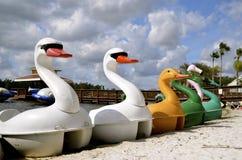 Łabędź i kaczki paddle łodzie Fotografia Stock