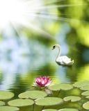Łabędź i lotosowy kwiat na wodzie obraz royalty free