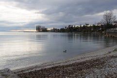 Łabędź i spokój w Leman jeziorze, Lausanne, Szwajcaria obrazy royalty free