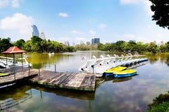 Łabędź jeziorni Fotografia Stock