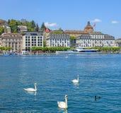 Łabędź na Jeziornej lucernie w Szwajcaria Zdjęcie Stock
